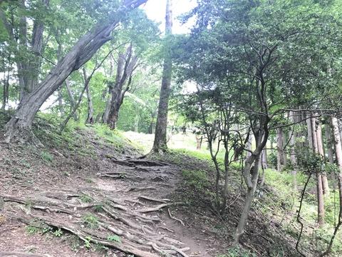 関八州見晴台手前のトレイル
