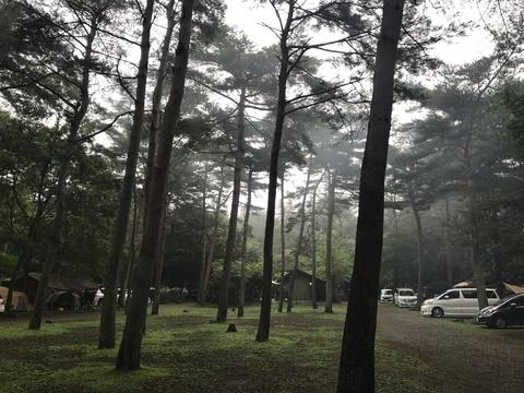 キャンプラビット園内2